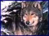 Аватар пользователя Lupus1